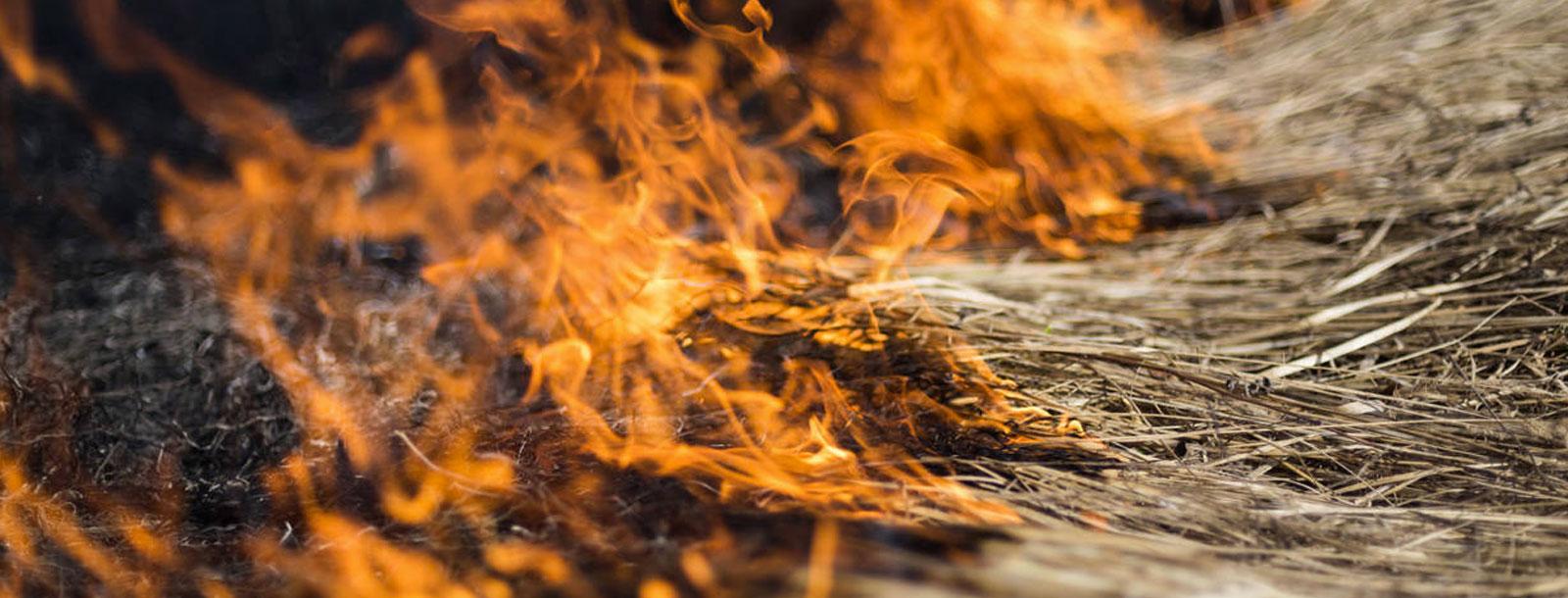 PuroPellet: Diez tips para prevenir incendios este verano