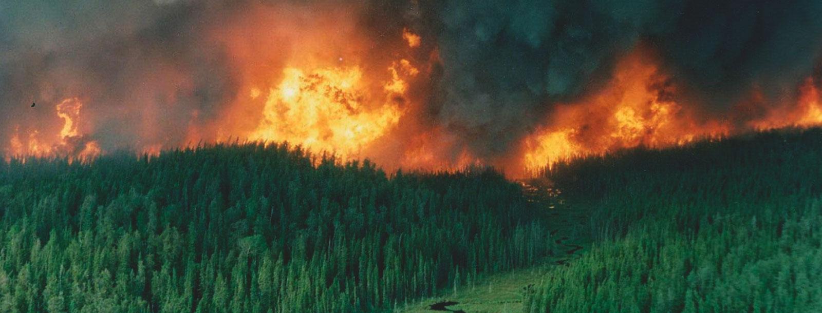 PuroPellet le dice no a los incendios forestales este verano
