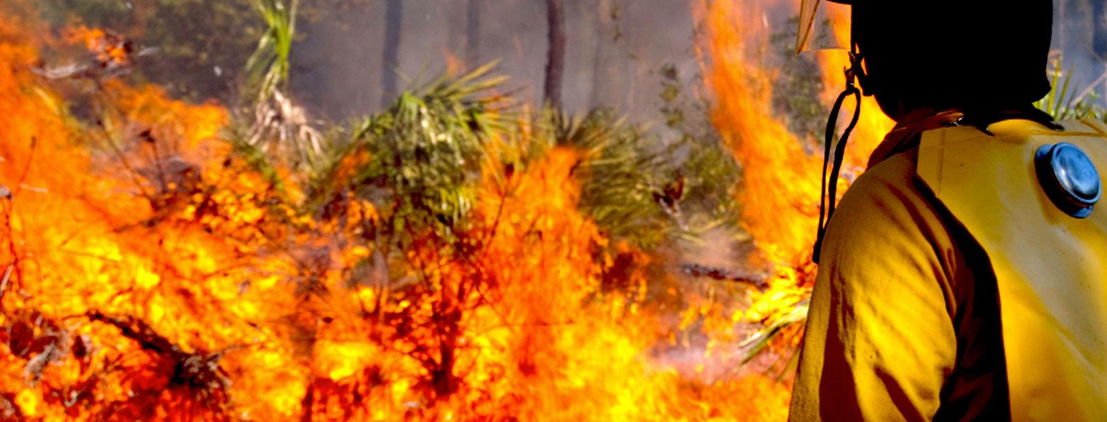Puro Pellet: Prevención máxima, la clave para evitar los incendios forestales