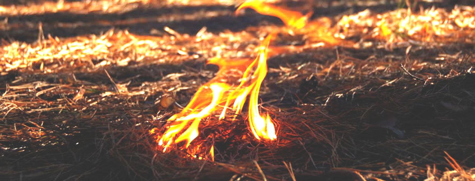 PuroPellet: Trabajando por un 2018 sin incendios forestales