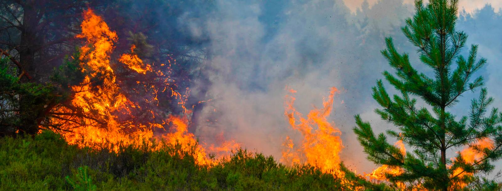 PuroPellet: Llama a prevenir potenciales incendios forestales en el Maule